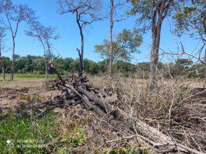 Desmatamento ilegal de vegetação nativa
